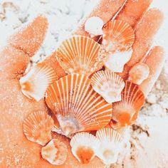 Summer Wallpaper, Beach Wallpaper, Iphone Background Wallpaper, Aesthetic Backgrounds, Aesthetic Iphone Wallpaper, Aesthetic Wallpapers, Orange Aesthetic, Summer Aesthetic, Vsco Pictures
