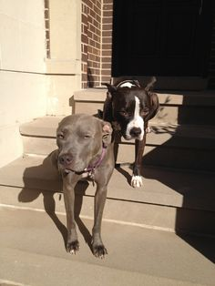 Our guard dogs :)