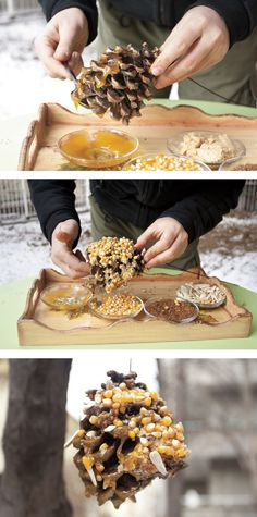 Pine Cone Bird Feeders: melt peanut butter, butter and honey, then roll pine cone in mixture. Then roll in a bird feed mix. Tie a string to the top and hang in a tree, close to a branch.