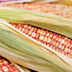 Sweet Corn | Rodale's Organic Life