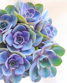 This color pallet is magical!⠀ via @amnaalnuaimii ⠀ Follow us @succulentcity ⠀ #succulentcity to be featured!!⠀ #succulents #succulentarrangement #succulent #succulove #succulentgarden #succulentaddict #succulentsofinstagram #cacti