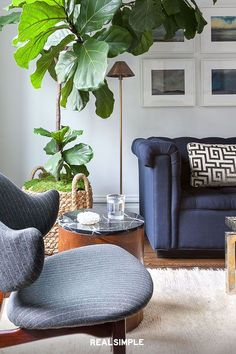 22 Chic and Clean Modern Living Room Design Ideas | Add some life to your space with a bold plant like designer Grant Gibson does with this larger-than-life Monstera. Bonus tip: mix things up by incorporating furniture in the same color family, but in different shades, like he does here with the blue sofa and chair. #realsimple #livingroomdecor #livingroomideas #details #homedecorinspo