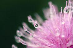drops by Hajnalka Farkas
