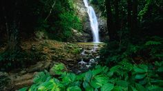 Fiji for First Timers by Lonely Planet. Picture of Biausevu Waterfall, near Korolevu, Coral Coast, Viti Levu