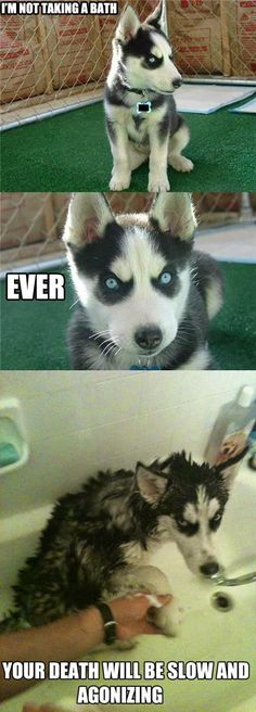 Top 30 Funny animal memes and quotes - Funny Animal Quotes - - Top 30 Funny animal memes and quotes The post Top 30 Funny animal memes and quotes appeared first on Gag Dad. Humor Animal, Funny Animal Jokes, Funny Dog Memes, Animal Quotes, Cute Funny Animals, Funny Animal Pictures, Cute Baby Animals, Funny Cute, Dog Pictures