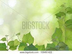 Leaves Stock Photo & Stock Images | Bigstock