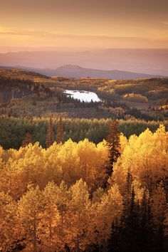 Fall Layers - Grande Mesa - Colorado - USA