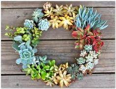 Krans van succulenten - how to make a succulent wreath. Suculentas Interior, Dream Garden, Home And Garden, Garden Living, Garden Art, Garden Tools, Crassula, Lithops Pseudotruncatella, Echeveria