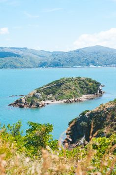 Living In New Zealand, Visit New Zealand, New Zealand Travel, Painted Globe, Wellington New Zealand, New Zealand Adventure, Urban Life, Plan Your Trip, Day Trip