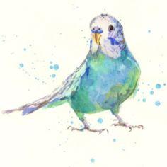 Birds - Budgie | Watercolour