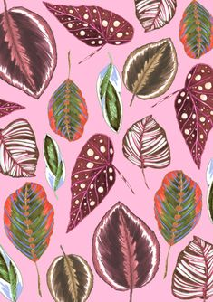 Created with copic markers and repeat pattern executed with adobe photoshop. Tropical leaves are a mix out of calatheas and begonia which are common houseplants. Plant Illustration, Botanical Illustration, Flowery Wallpaper, Leaf Photography, Garden Drawing, Tropical Leaves, Botanical Art, Watercolor Cards, Flower Art