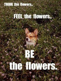 funny dog loves flowers