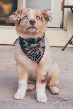 The Kota Dog Bandana is one of our warmest most heavy weight fabrics. This burgundy black grey geometric Aztec dog bandana will keep the pup cozy! Super Cute Puppies, Baby Animals Super Cute, Cute Little Puppies, Cute Dogs And Puppies, Cute Little Animals, Cute Funny Animals, Doggies, Funniest Animals, Cute Baby Dogs