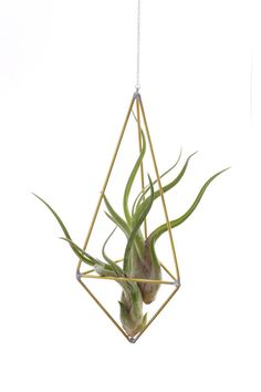 Teardrop air plant cage // Himmeli