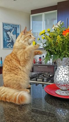 the flowers. Orange And White Cat, White Cats, Orange Tabby Cats, Red Cat, Ginger Cats, Outdoor Life, Cats And Kittens, Cat Stuff, Flowers