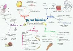 Reino Animalia - De poríferos a moluscos.