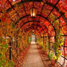 Autumn archway in Tallinn, Estonia. Photo courtesy of jerricatan on Instagram.