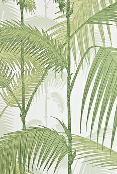Palm Jungle Wallpaper illustrated Palm tree wallpaper in greens on cream.