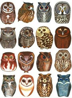 Wonderful depictions of owls - I recognize a few, could probably get the rest with a bird book!【nancyyeqian】各种萌