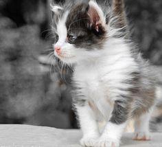 **The kitty adventurer.