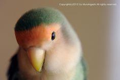 個別「20121116161458」の写真、画像 - photosgo's fotolife