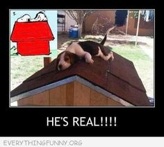 funny caption beagle sitting on dog house roof snoopy he's real ...........click here to find out more http://googydog.com