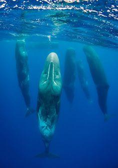 Sleeping Whales by Magnus Lundgren