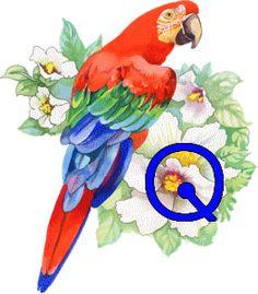 OISEAU-FLO-Q_2.gif