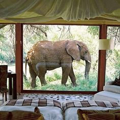 """""""How amazing would it be to see an elephant walk by your room on your honeymoon in South Africa! Wanderlust Travel, Adventure Awaits, Adventure Travel, Beautiful World, Beautiful Places, Travel Photography Tumblr, Bali, Kuta, Adventure Is Out There"""