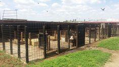 Angajez ingrijitor animale la o ferma din judetul Dolj, mai exact in comuna Bratovoesti, la 25 km de Craiova.