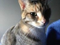 #REUNITED – Tabby #CAT – Queens Park #NSW 2022