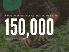 cannabis business employment