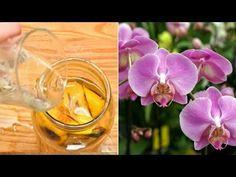 Coaja de banană - cel mai bun îngrășământ natural pentru Orhideele tale   Eu stiu TV - YouTube