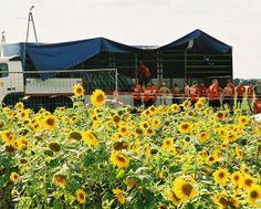 Na Przystanku Woodstock w Żarach, całe pole porastały słoneczniki. Pięknie było! :) Fot. Michał Sandecki