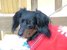 Bo . . Christmas 2010