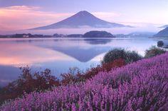 河口湖(山梨県) ©富士河口湖町観光課 - Lake Kawaguti & Mt. Fuji