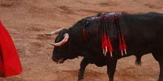Demand Spain End All Bullfighting Now!