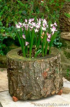 Now I know what to do with a tree stump