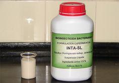 Bioinsecticida que mata al vector de dengue