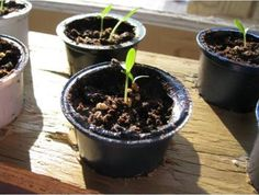 K-cup seed starter 10 Ways to Upcycle Used K-cups http://planetforward.ca/blog/10-ways-to-upcycle-used-k-cups/?goback=%2Egde_1819367_member_228389860
