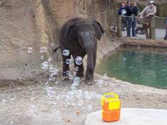 The Saint Louis Zoo #animals have a wish list of enrichment items! Treat them with something they can sniff, stomp, chew or chase!