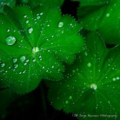 Liquid Cooling - (JB) Jorge Bayonas Photography