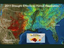 2011 saw record breaking drought across New Mexico, Texas, Oklahoma and Louisiana - http://forwarn.forestthreats.org/highlights/99