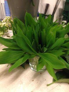 Stelle liljekonvallblader til brudebukett