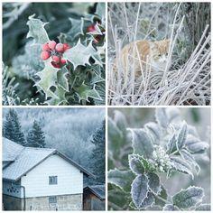 Herzenswärme Mood Boards, Dandelion, Winter, Flowers, Plants, Cards, Inspiration, Color, Heart