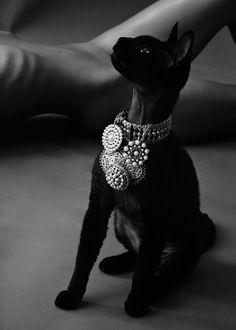 kitty cat got style