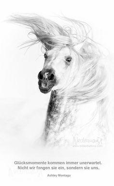 Andalusier/PRE - Pferdefotografie, Hundefotografie, Fotografie Bettina Niedermayr Pferde - Mensch & Pferd - Hunde- Portrait - Stallschilder ...
