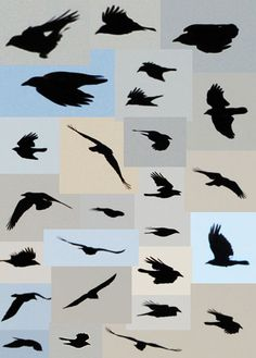 flying crows(: