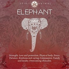 Elephant Symbolism - Elephant Spirit Animal - Elephant Symbolism – Elephant Spirit Animal Find Your Spirit Animal – Spirit Animal Meaning Elephant Elephant Spirit Animal, Elephant Quotes, Elephant Love, Elephant Art, Quotes About Elephants, Spirit Animal Tattoo, Elephant Tattoos, Small Elephant, Elephant Symbolism