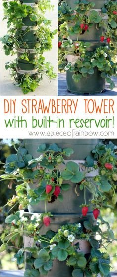 Build a strawberry tower.
